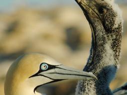 La compétition mondiale entre les pêcheries et les oiseaux marins persiste malgré leur déclin généralisé