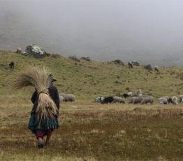 Biodiversité et enjeux de développement dans les pays du Sud