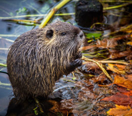 Biodiversité et espèces exotiques envahissantes