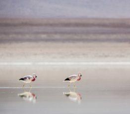 La biodiv' en images