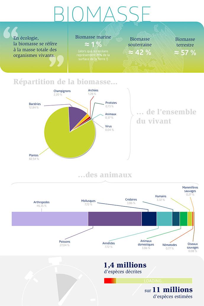 Répartition globale de la biomasse au sein de la biosphère