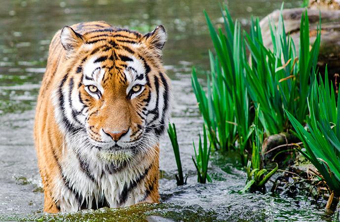 [Nouvelle synthèse] L'extinction paradoxale des espèces les plus charismatiques