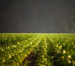 Devons-nous choisir entre nourrir l'humanité et protéger la nature? Modélisation des liens entre l'environnement et la démographie humaine