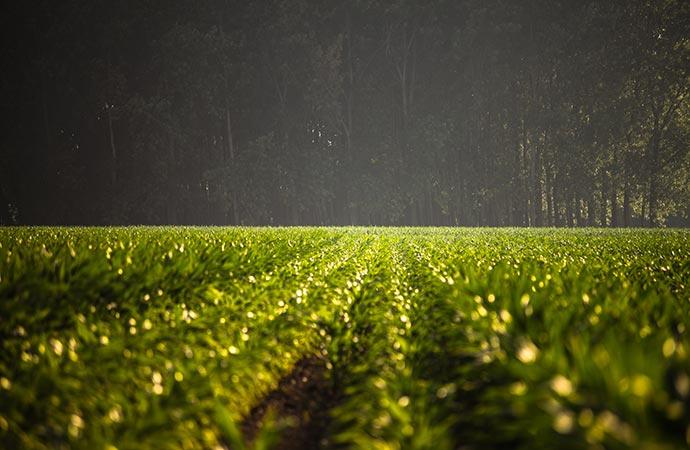 [Synthèse] Devons-nous choisir entre nourrir l'humanité et protéger la nature ?