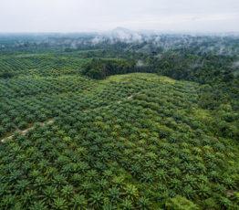 Action n°11 : Je limite ma consommation d'huile de palme
