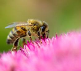 Action n°3 : Je cultive des plantes favorables à la biodiversité