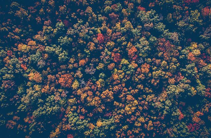 #ScienceDurable – La forêt : une véritable alliée dans la lutte contre le réchauffement climatique ?