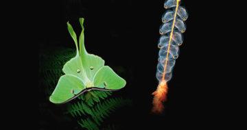 La Nuit de la Biodiversité