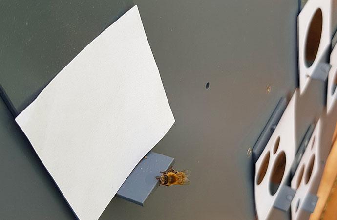 Les abeilles, ces grandes mathématiciennes !