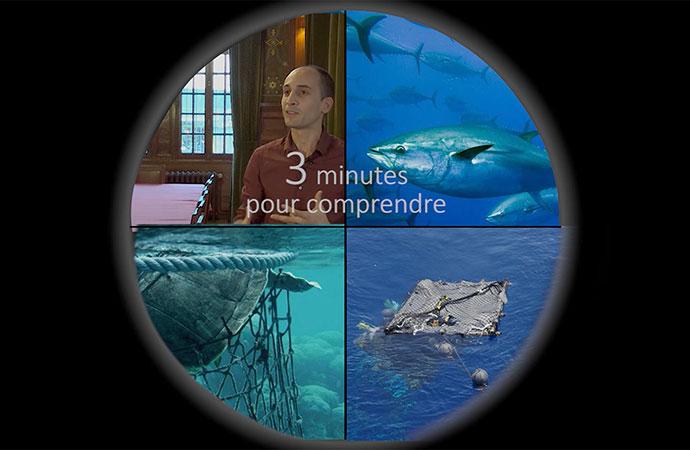 [DCSMM] 3 minutes pour comprendre l'état des mammifères marins dans les eaux métropolitaines