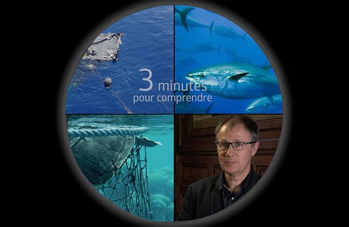 [DCSMM] 3 minutes pour comprendre l'état écologique des espèces halieutiques commerciales pêchées dans les eaux métropolitaines