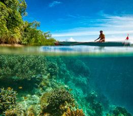 Schémas spatiaux et temporels  de blanchissement de masse des coraux pendant l'Anthropocène