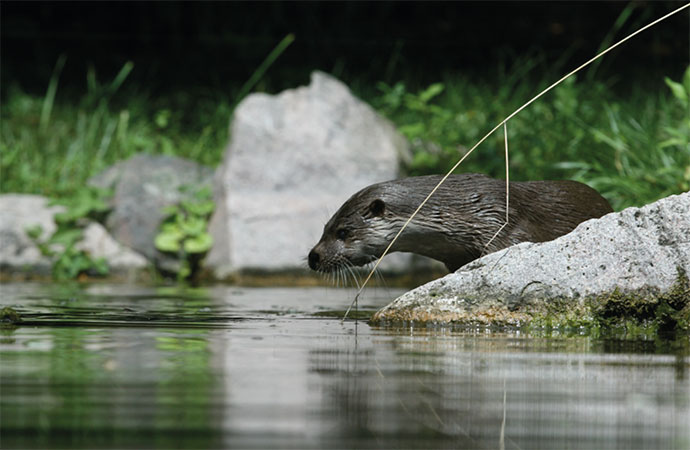 De la pollution aux obstacles sur les cours d'eau : comment lever les barrages à la biodiversité ?