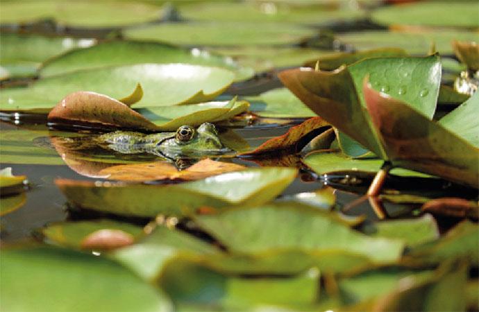 """Un trésor au fond du jardin… Les mares, """"points chauds"""" de la biodiversité"""