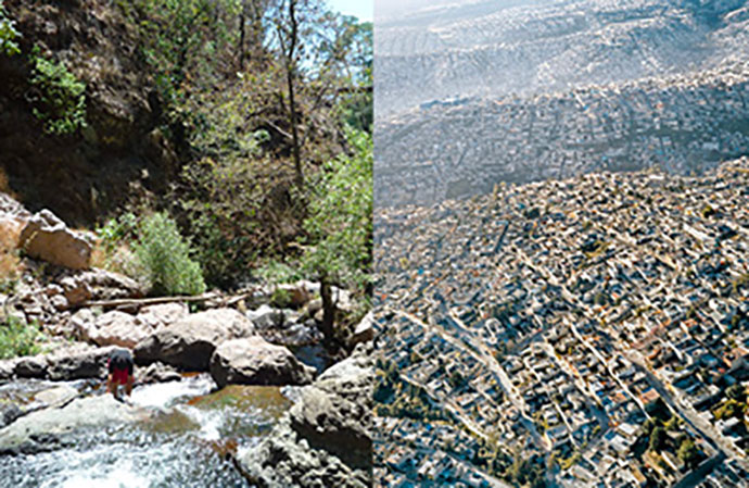 De l'importance de la nature en ville pour notre santé mentale