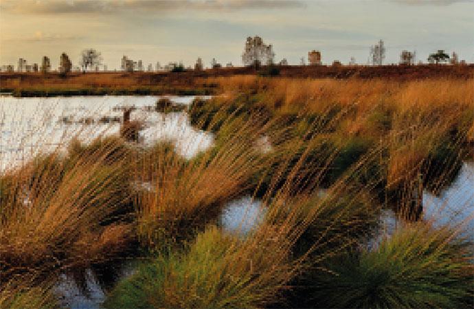 Les zones humides : des réservoirs de biodiversité à préserver
