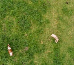 Biodiversity & agriculture