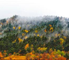 #ScienceDurable – Plaidoyer pour les forêts mélangées