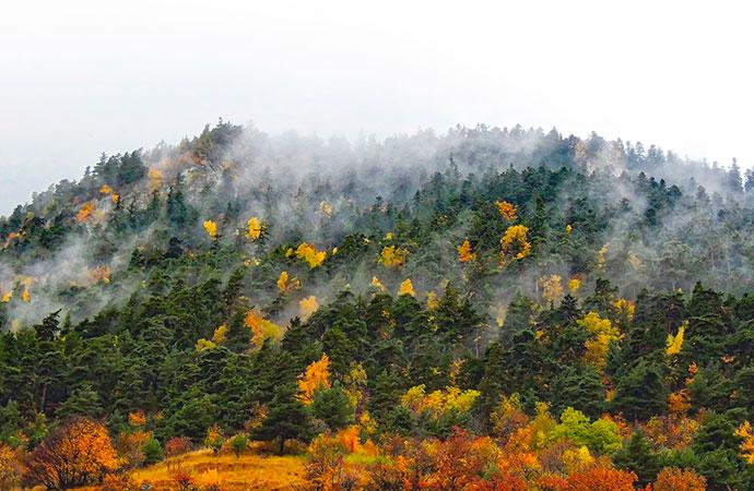 Plaidoyer pour les forêts mélangées