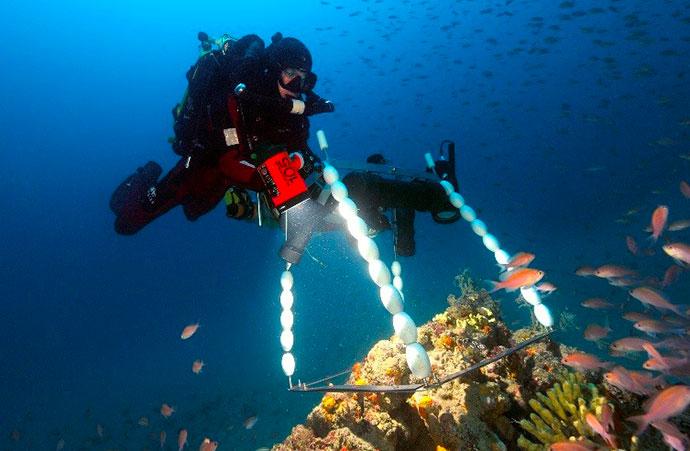 Mieux connaître la biodiversité européenne pour mieux la protéger : l'exemple des récifs coralligènes méditerranéens