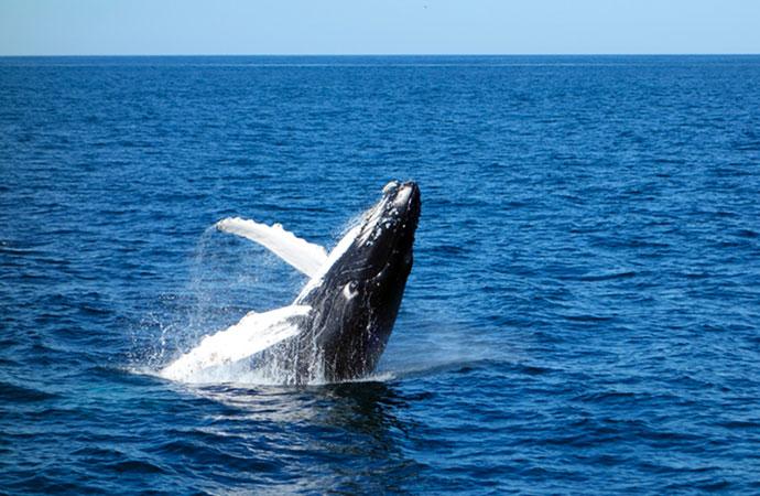 Des aires marines protégées en haute mer : l'Europe pionnière