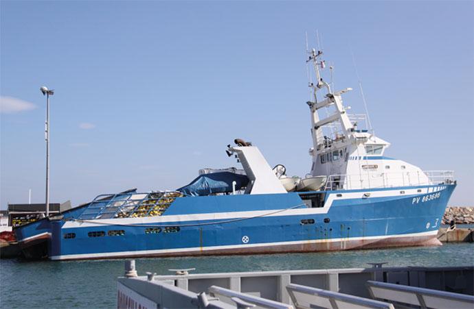 La régulation de la pêche européenne a-t-elle sauvé le thon rouge ?