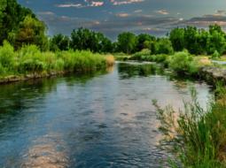 La pollution antibiotique des eaux de surface : occurrence et effets