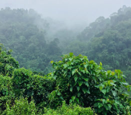 La synthèse de données au service de la flore tropicale africaine menacée