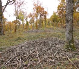 #ScienceDurable – Production de bois-énergie et impacts sur la biodiversité européenne