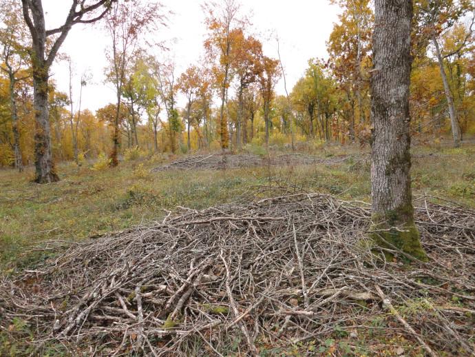 [Synthèse] Production de bois-énergie et impacts sur la biodiversité européenne