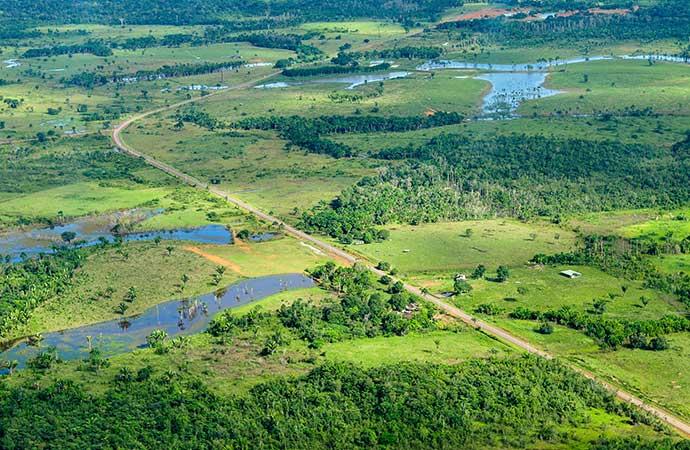 Urgence : il faut sauver les forêts tropicales avant qu'elles ne disparaissent complètement !