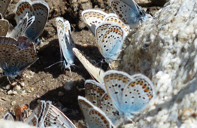 Les sites Natura 2000 ont-ils aussi un impact sur les espèces d'oiseaux et de papillons non ciblées ?