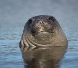 Localiser les prédateurs pour protéger les écosystèmes de l'océan Austral