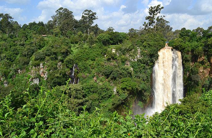 [Synthèse bibliographique] Incidence du changement climatique sur la biodiversité dans les écosystèmes forestiers et littoraux d'Europe et d'Afrique
