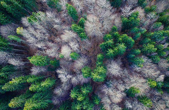 [Appel à projets – Biodiversa] Biodiversité et son influence sur la santé animale, humaine et végétale