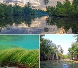 #ScienceDurable – Les écosystèmes côtiers, puits de carbone bleu