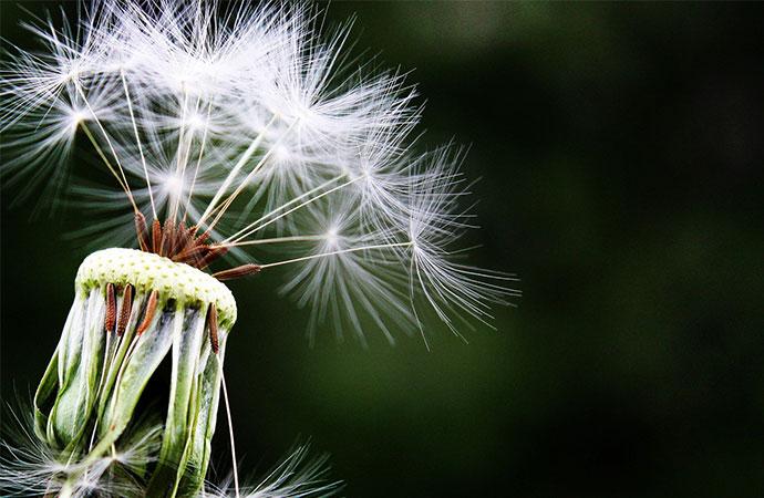 [#ScienceDurable] En juin, la campagne s'intéresse à la conservation et restauration de la vie terrestre