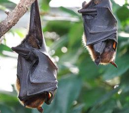 #ScienceDurable – Peut-on prévenir les épidémies grâce aux animaux ?