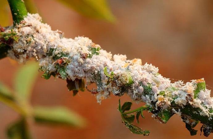 #ScienceDurable – Sous les tropiques, la lutte biologique peut limiter la déforestation et l'érosion de la biodiversité