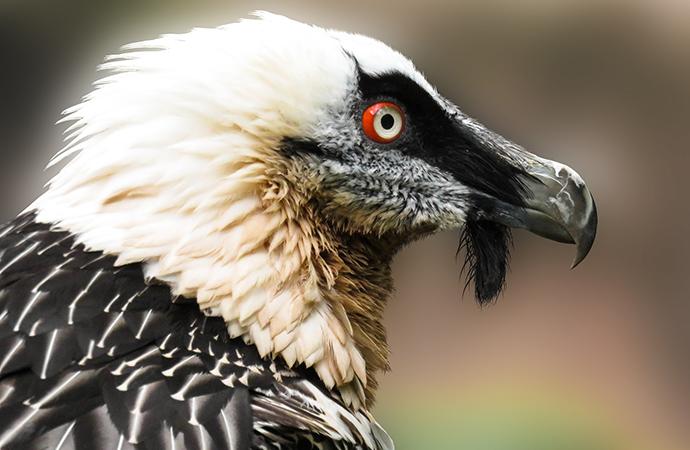 #ScienceDurable – Le déploiement de la biologie de la conservation