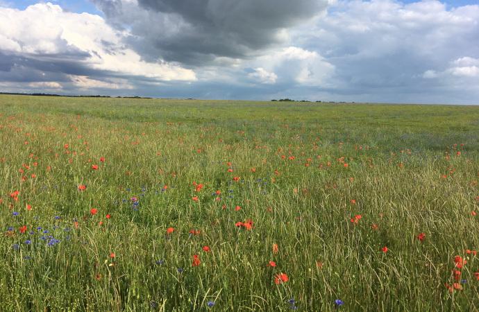 Les plantes adventices au service de l'agriculture : pourquoi sont-elles essentielles et comment les protéger ?