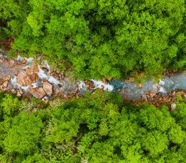 [Appel à projets – Biodiversa et Water JPI] Conservation et restauration des écosystèmes dégradés et de leur biodiversité