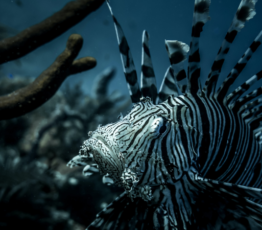 [Appel à relectures par les pairs – Ipbes] Évaluation sur les espèces exotiques envahissantes