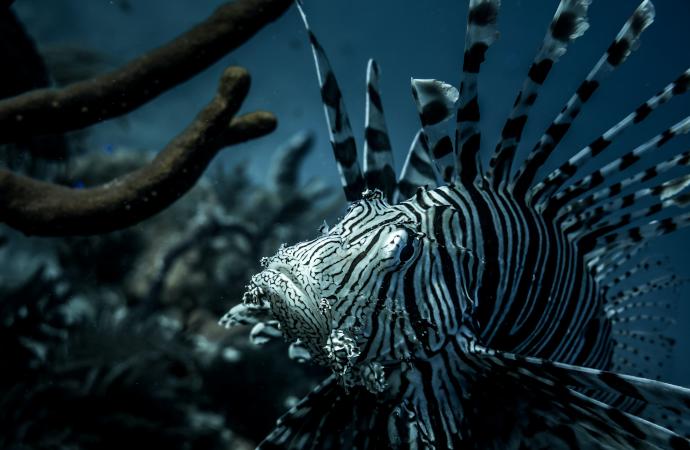 [Ipbes] Appel à relecteurs pour l'évaluation sur les espèces exotiques envahissantes