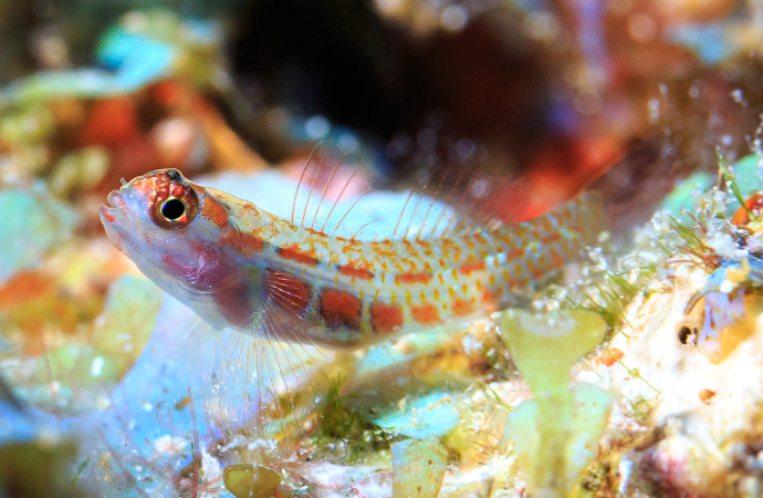 Les conditions environnementales extrêmes réduisent la biodiversité et la productivité des poissons des récifs coralliens
