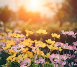 #ScienceDurable – Comment faire de votre jardin un havre de biodiversité