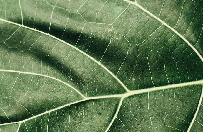 [Appel à candidatures – Ipbes] Atelier sur la modélisation des scénarios sur l'avenir de la nature