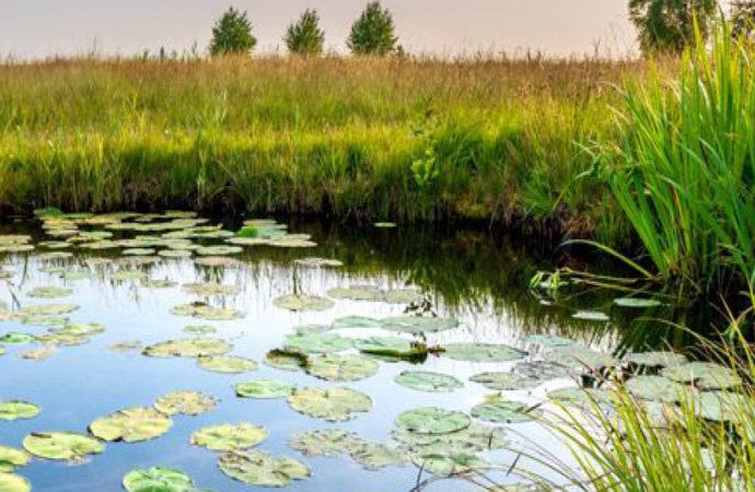 Webinaire sur l'appel à projets BiodivRestore «Conservation et restauration des écosystèmes dégradés et de leur biodiversité»