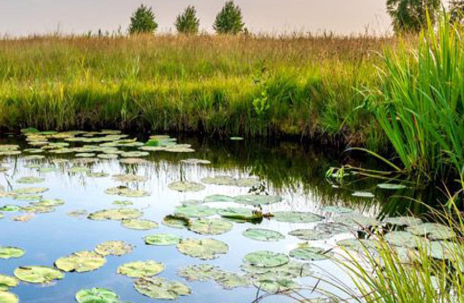 """Webinaire sur l'appel à projets BiodivRestore """"Conservation et restauration des écosystèmes dégradés et de leur biodiversité"""""""