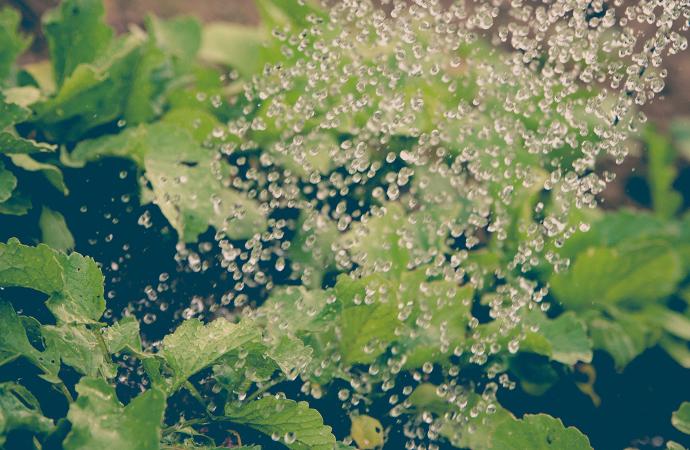 """[#ScienceDurable] Ce mois-ci, la campagne s'intéresse à la thématique """"agriculture et biodiversité"""""""